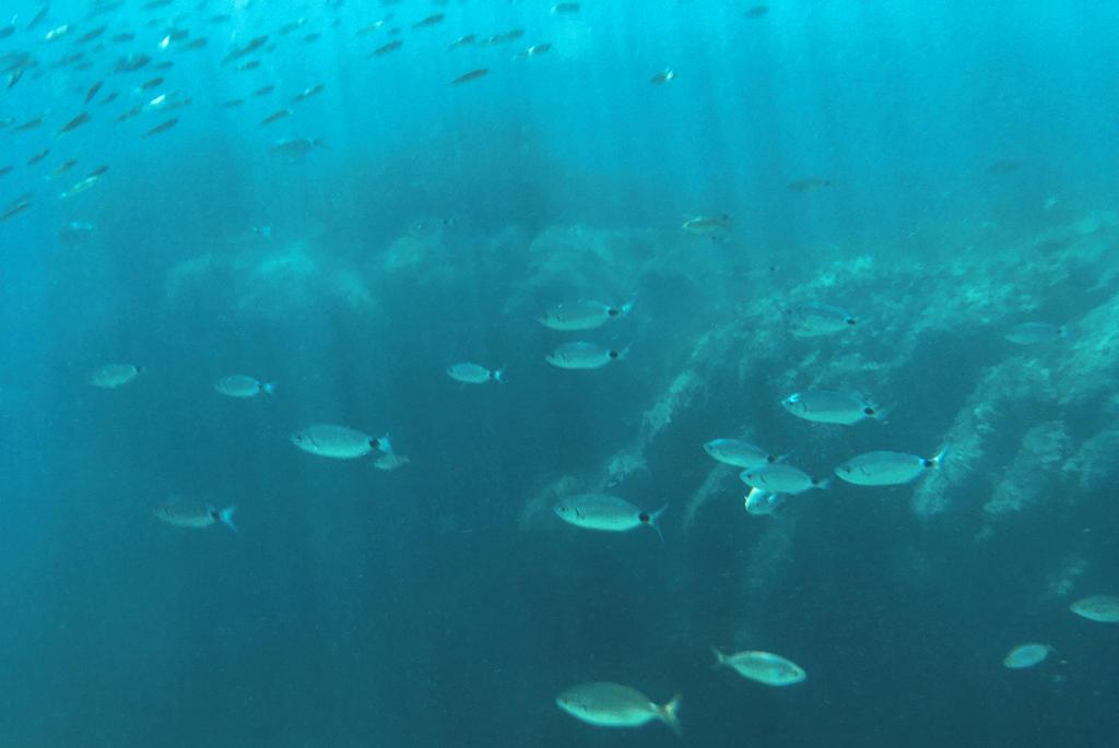 Tolle Fische und eine spannende Unterwasserlandschaft machen das Schnorcheln an der Côte d'Azur zum Erlebnis.